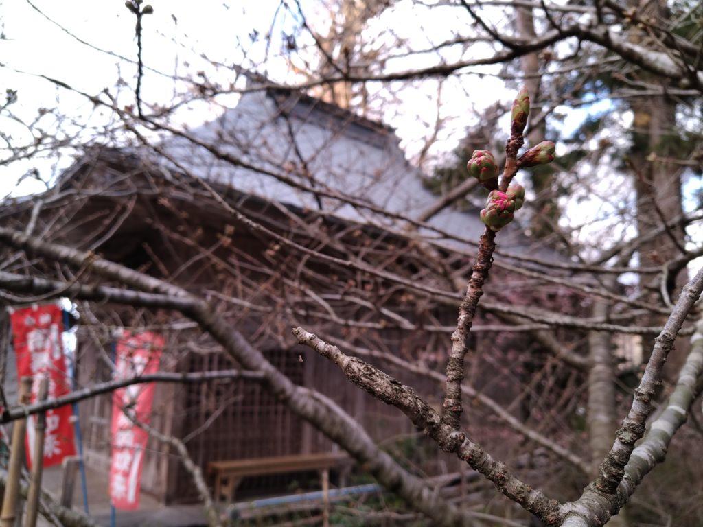 令和3年4月14日桜の開花情報